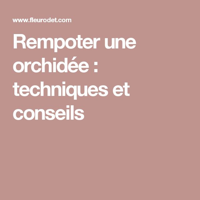 1000 id es sur le th me rempoter une orchid e sur pinterest une orchid e rempotage orchid e. Black Bedroom Furniture Sets. Home Design Ideas