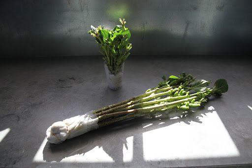 how to make hydrangea cuttings last