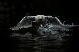 Bildresultat för Naturfotografier