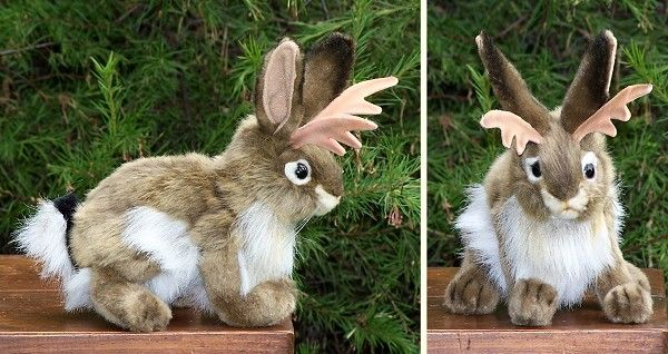 Is that a Jackalope? It sure is!! If you think that's unbelievable come check out the Hansa collection of Museum quality plush; they're incredibly realistic!