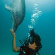 Take a PADI Scuba Certification and explore the ocean.
