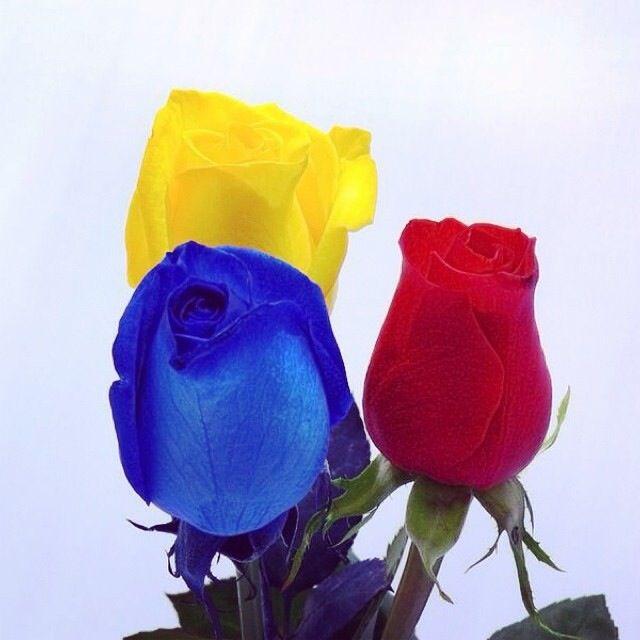 Los colores de nuestra BANDERA COLOMBIANA