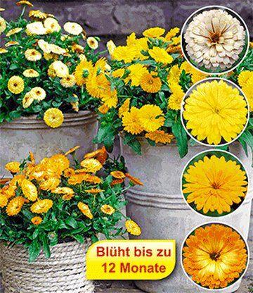 tolles winterfeste gartenblumen die die kalte gut uberstehen photographie pic der fcceffddabacfacfb