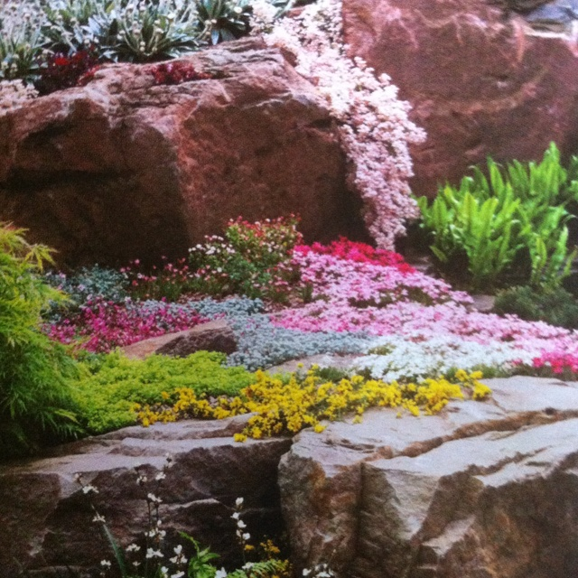 45 best Rock gardening images on Pinterest Gardening