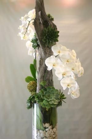 orchids, succulents and driftwood by Hercio Dias
