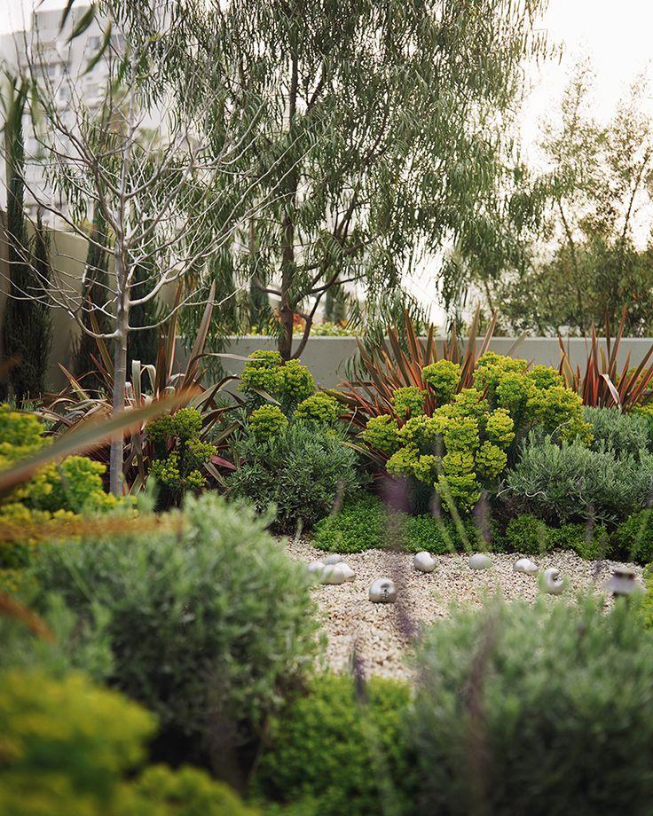 Euphorbia in the garden