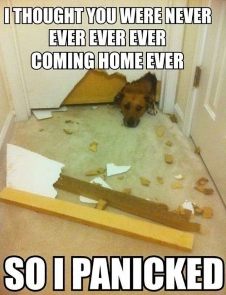silly dog :)