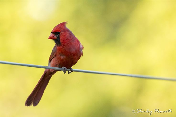 Bird on a Wire by Shirley Howarth on SnapThePlanet.com