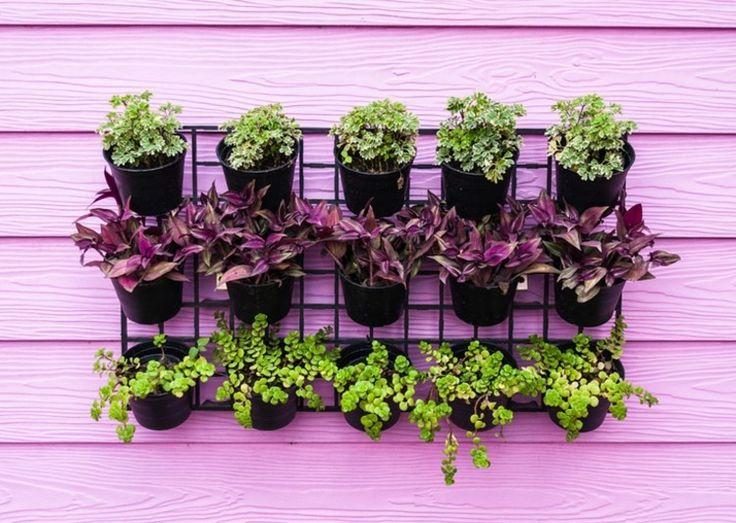 kleines topfgarten mit stil kollektion bild oder fceebdafdbeda