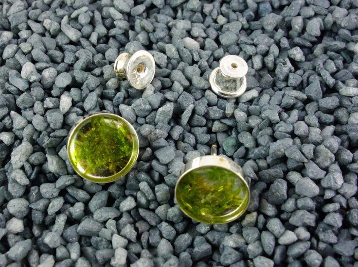 Ohrringe als Stecker mit echtem Moos /  grün, 925er Silber – Brombeergrün