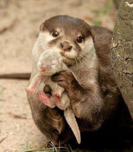 Mamma lontra - Cuore di mamma