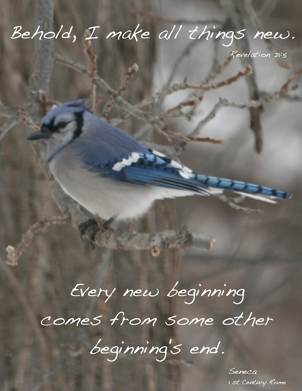 132 Best Blue Jays Images On Pinterest Blue Jay Feathers And