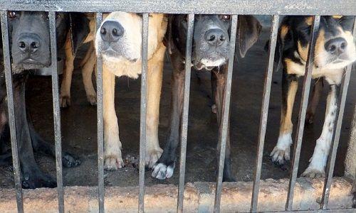 Animaux - Signez la pétition : Trafic de chiens en France et pays de l'Est