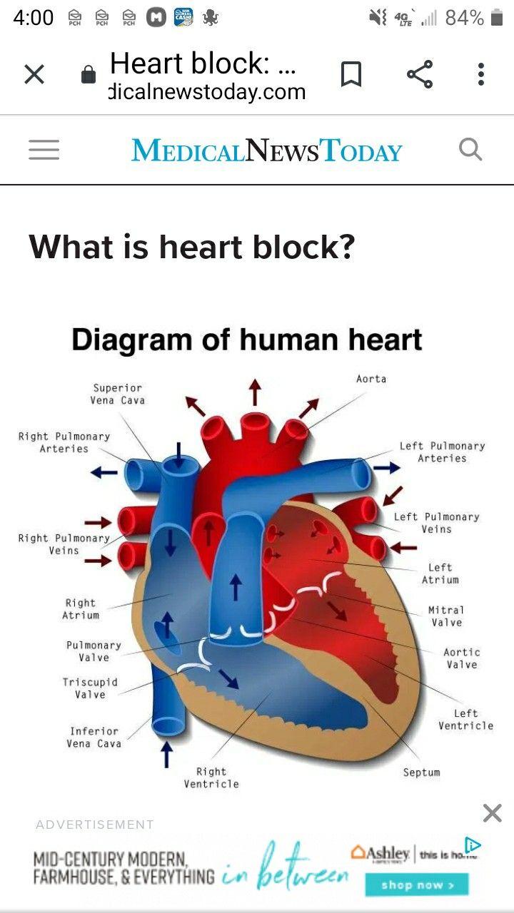 Pin By Joyce Powell On Heart Liver Etc In 2020 Heart Blocks Arteries Human Heart