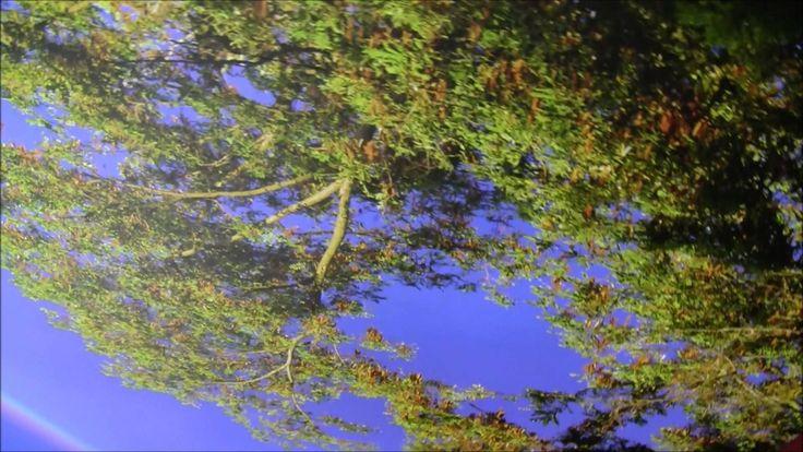 Poświetlenie sufitu napinanego z nadrukiem drzew. Dekoracyjne oświetleni...
