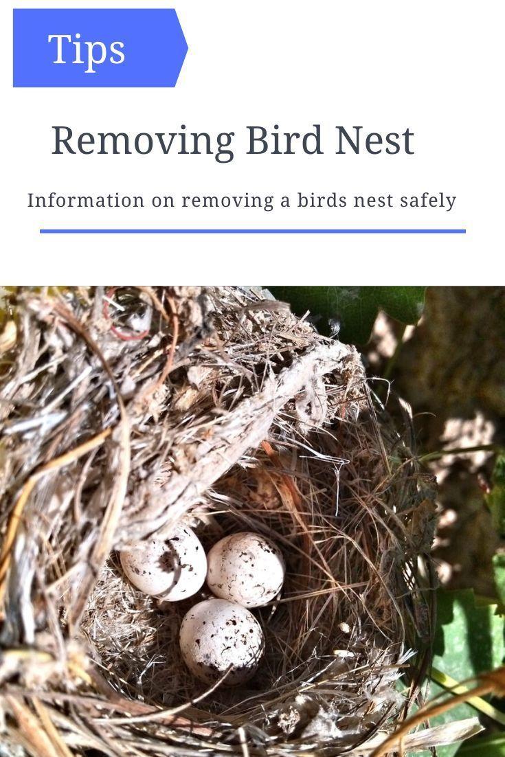 How To Safely Remove A Bird S Nest In 2020 Removing Birds Bird Nest Wild Birds