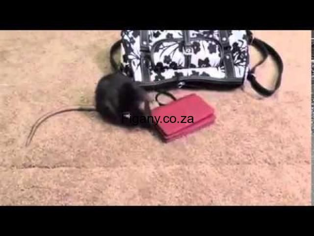 ***AMAGUNDWANE'rats***@SHOT BOYZ*** WONDERFUL+27737785444 CLEAN MONEY MAKING SPIRITS FOR HIRE SIMPLE FASTER(&)MOST EFFECTIVE MONEY SPELL TO MAKE YOU RICH SO QUICK AND PERMANENT  KZN JHB ***AMAGUNDWANE'rats***@SHOT BOYZ*** WONDERFUL+27737785444 CLEAN MONEY MAKING SPIRITS FOR HIRE,SO ARE YOU IN URGENT NEED OF MONEY CAL NOW