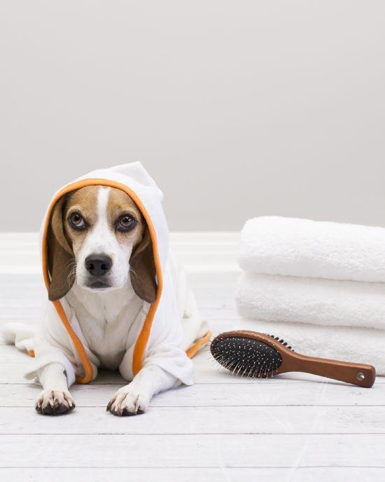 Dog bath: 6 tips to make dog baths easy! | Pawsh Magazine