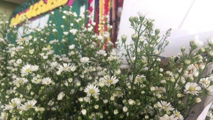 26 Wallpaper Bunga Aster Putih Unduh Gambar Gambar Gratis Yang Menakjubkan Tentang Wallpaper Bunga Bunga Ini Memiliki Keindahan Di 2020 Wallpaper Bunga Bunga Aster