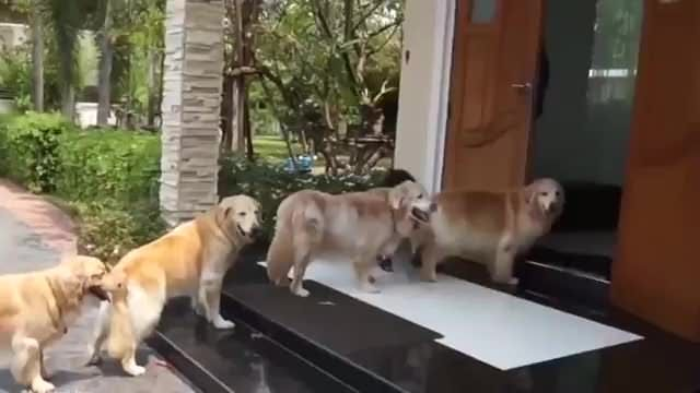 Dogs are waiting in line to get their paws cleaned before entering the house <3