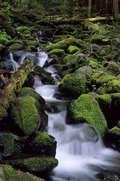 Mossy Rocks and Creek, Soleduck Valley, Olympic National Park, Washington.  Photo: Wolfgang Kaehler