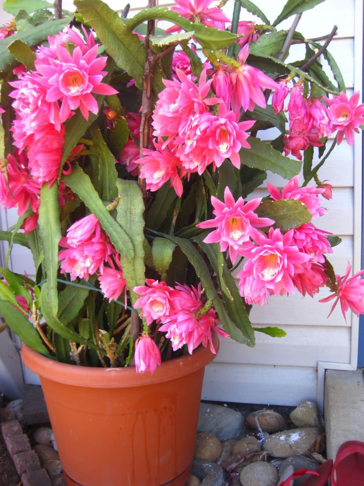 how to grow orchids from cuttings with pictures