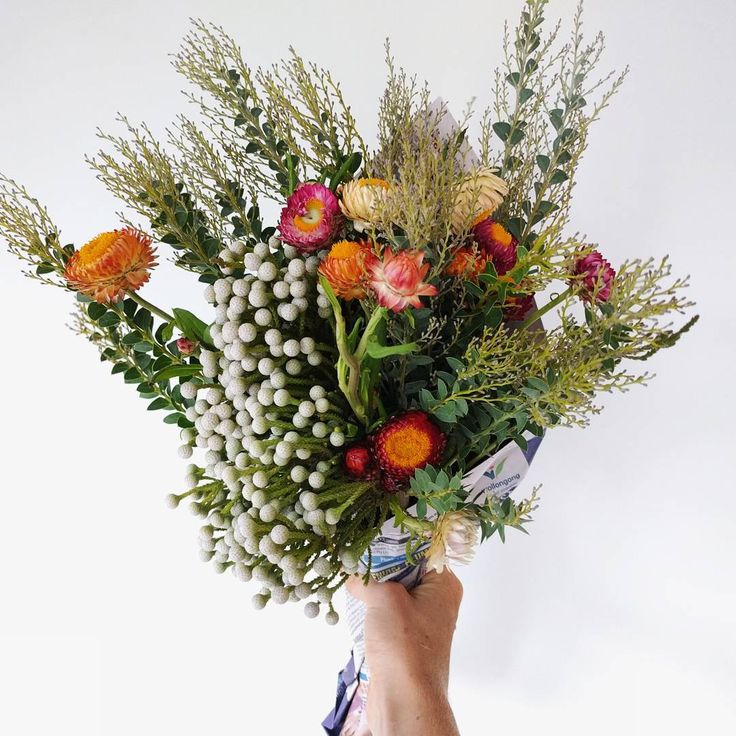 Todays wild posy featuring everlasting daisy's  get in touch for flower delivery between Helensburgh and Stanwell #thelocalposy #everlastingdaisy #strawflower #australiannatives #shoplocal #helensburgh
