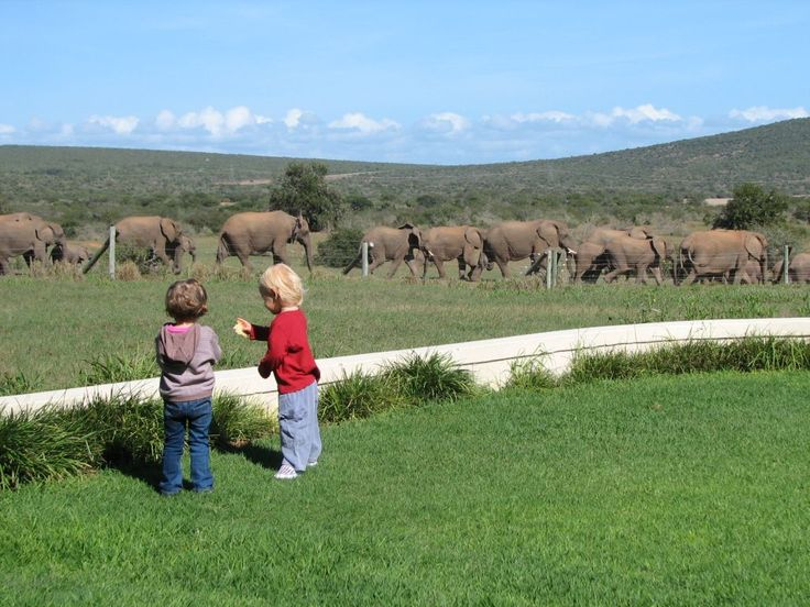 Children at River Bend Lodge watching as a herd of elephants pass the lodge. Addo Elephant National Park, South Africa.