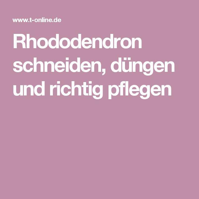 Rhododendron schneiden, düngen und richtig pflegen