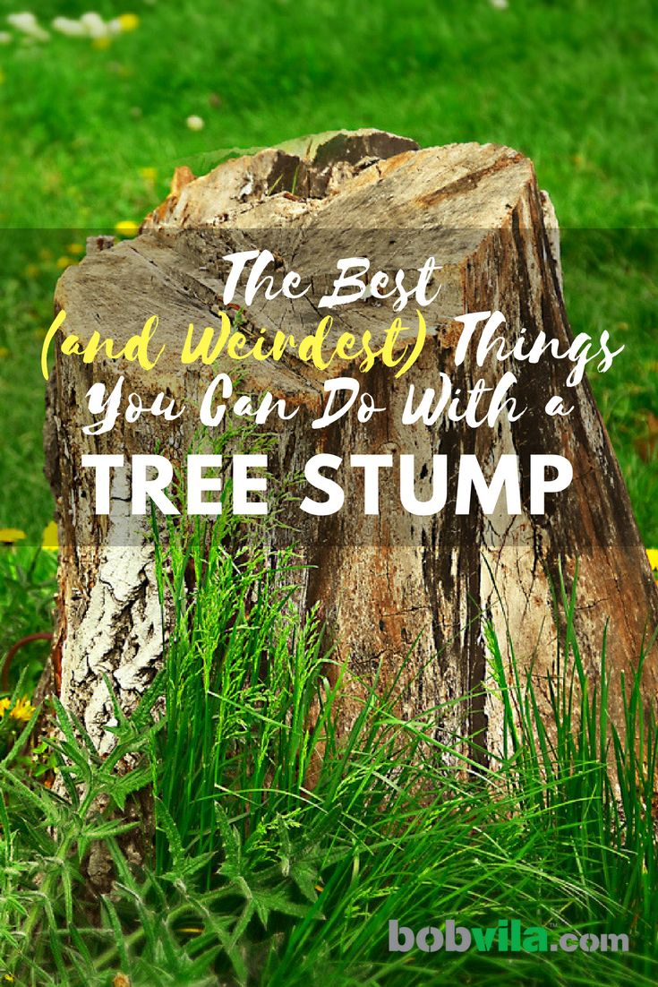 The Best And Weirdest Things You Can Do With A Tree Stump Tree