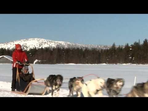 El husky Safari en Kuusamo en Laponia