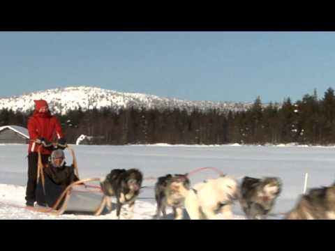 Сафари на собачьих упряжках в Куусамо