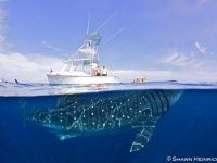Photographer explains stunning and unique whale shark image
