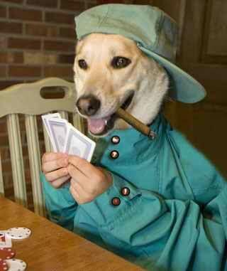 A dog playing poker