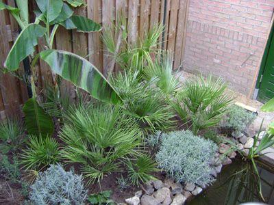 Tropische tuin, exoten en palmbomen in Nederland - Palmboom Nu
