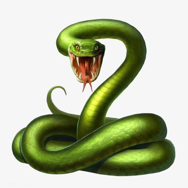 Snake Clipart Cartoon 3d Green Zhang Mouth Snake Poisonous Snake Zhang Mouth Snake Poisonous Horror Clipart Snake Drawing Snake Illustration Snake
