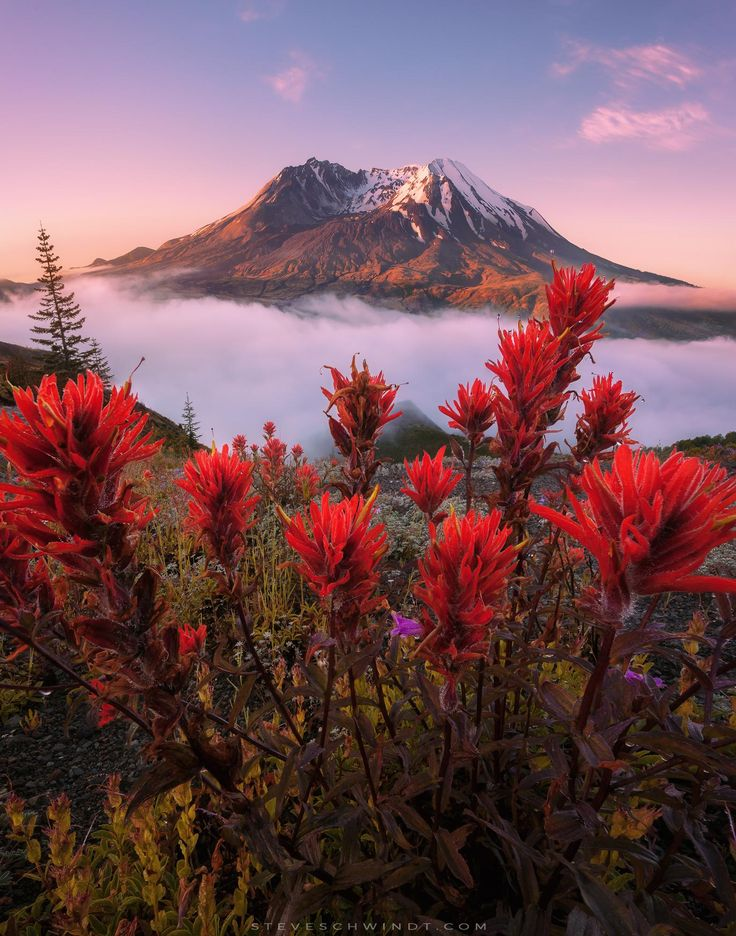 Clearing fog reveals vibrant wildflowers on a beautiful morning near Mount St. Helens Washington [OC] [15722000] #reddit