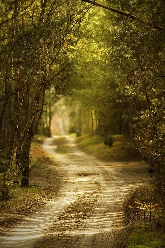 A winding country road | Winding paths & Country roads ...