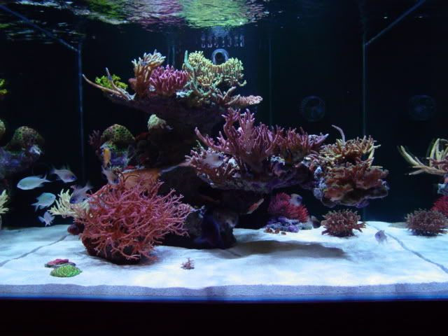 25 best ideas about 150 gallon fish tank on pinterest for How to reseal a fish tank