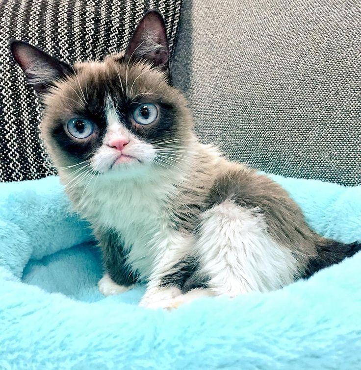 Backstage at the @NickelodeonTV #KCA Grumpy Cat waits to see if she wins @Nickelodeon_AU #FavoriteAnimal #GrumpyCat #Tard #TardarSauce - March 2015