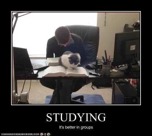 26 best Study Meme's images on Pinterest | Funny stuff ...