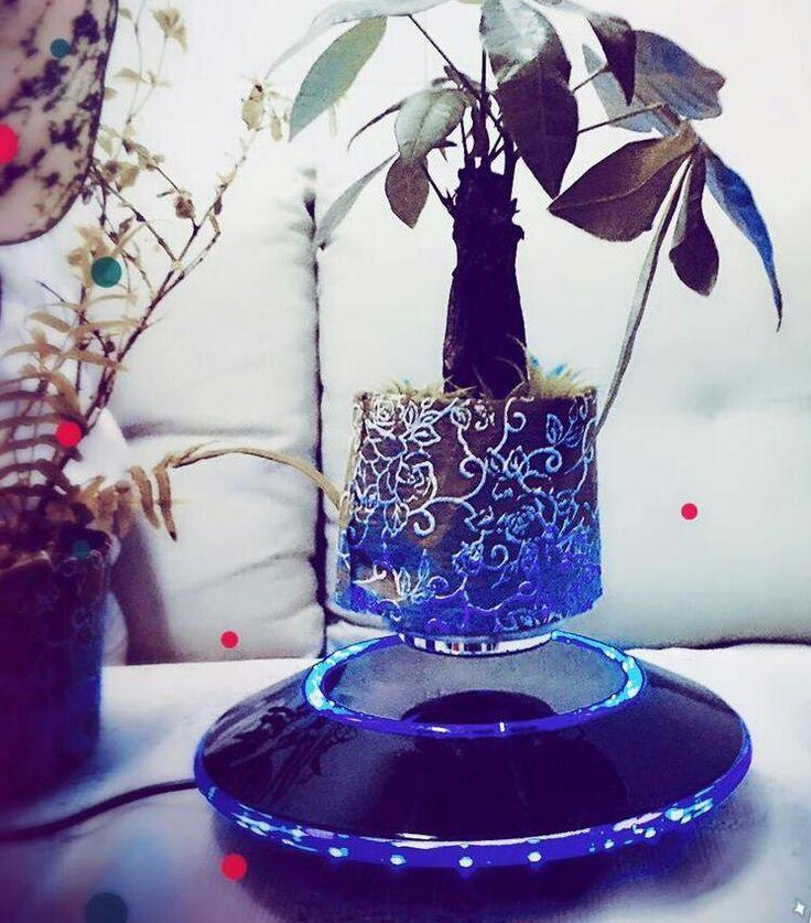 Fashion air bonsai.
