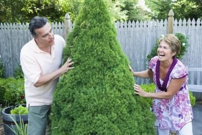 How to Trim a Spiral Topiary