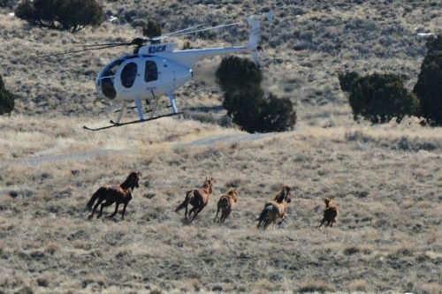 """""""Don't let the cattle and ranching industry and others determine the fate of our remaining wild mustangs. Let your voice ring out to your elected officials, friends, acquaintances, businesses, and associations. Tell them that the wild horses are as important to you as any other part of our American history, and that you will not tolerate the elimination of one of America's last true icons."""" –Madeleine Pickens"""