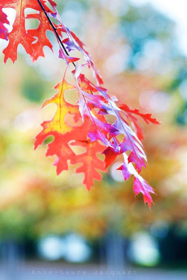 automnea2