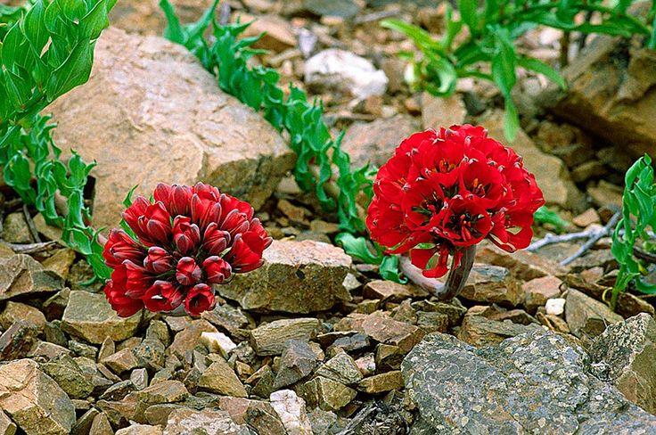 Mejores 45 im genes de plantas flores cactus en for Semillas de cactus chile