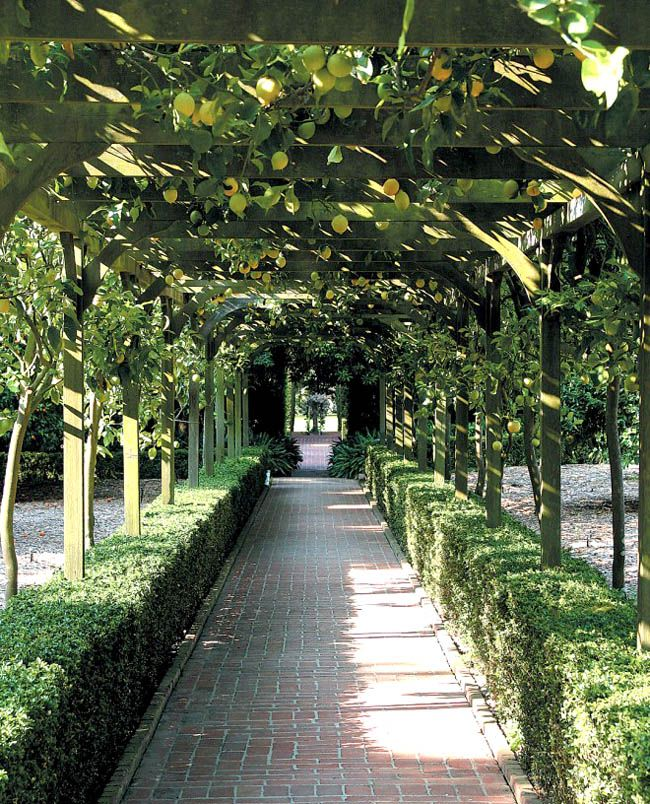 12 Amazing Living Structures You Can Create!  Lemon arbor.  Even better, a wisteria arbor with native wisteria