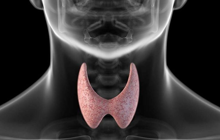 "Weight loss is a common symptom of hyperthyroidism—or an over-active thyroid, Cappola says. ""If I su... - Photograph by SCIEPRO/GETTY IMAGES"