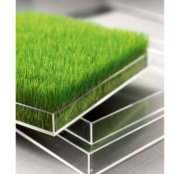 grow grass indoors- I have a friend who does this and his ...
