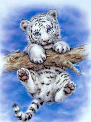 Alubild 16x21 cm: First Adventure by Kayomi Harai (Weiße Tiger) - jetzt bei Fantastic Pictures online bestellen!